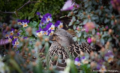 An array of wildlife including our ducks start to appear -spring wedding