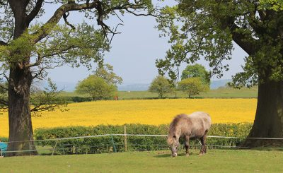 With its beautiful countryside setting where horses roam in their paddock Sandhole Oak Barn is the perfect spring wedding venue