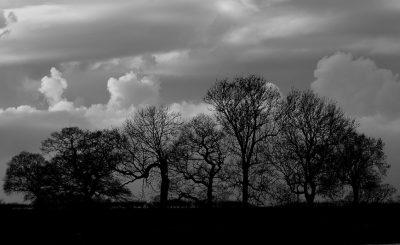 Trees silhouette barn wedding venue